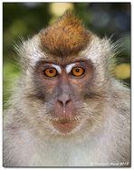 Borneo wildlife #3