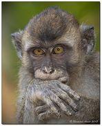 Borneo wildlife #5