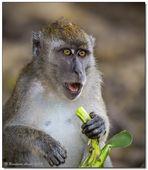 Borneo wildlife #6