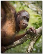 Borneo wildlife #7