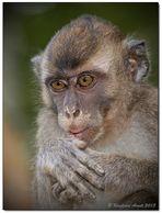 Borneo wildlife #8