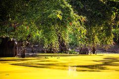 Borneos Regenwald