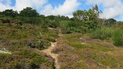 Bornholm-Heide