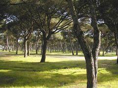 Bosc d'estiu