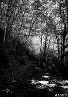 Bosc romàntic / Romantischer Wald