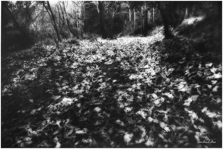 bosco 1