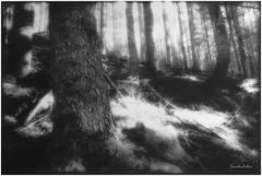 bosco 4