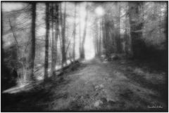 bosco 5