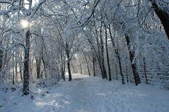 bosco innevato