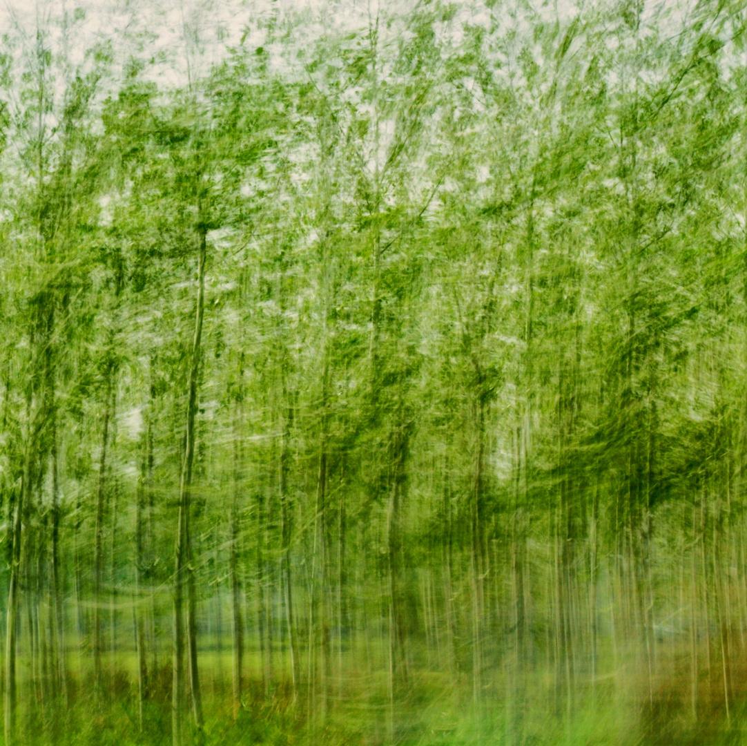 bosco verde