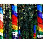 Bosque animado de Oma