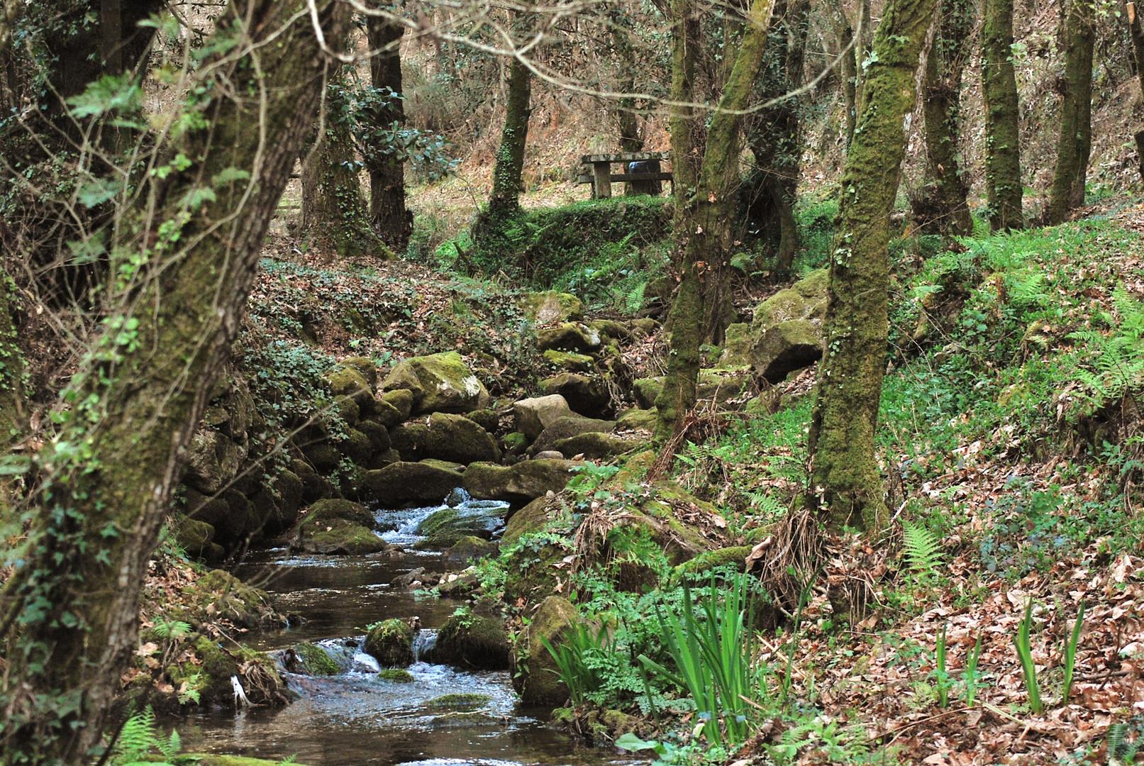 bosque con encanto ( vigo )
