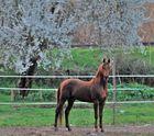 bosque con encanto ( vigo ) el caballo