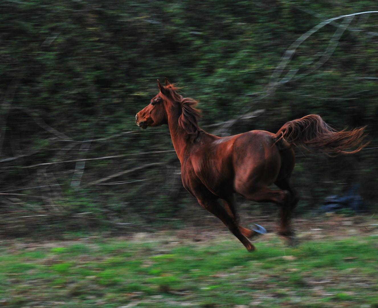 bosque con encanto ( vigo ) el caballo II