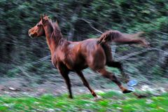 bosque con encanto ( vigo ) el caballo III
