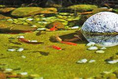 bosque con encanto ( vigo ) el estanque