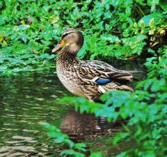 bosque con encanto ( vigo ) el pato