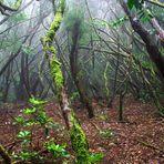 Bosque de brujas