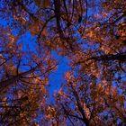 Bosque de Chopos
