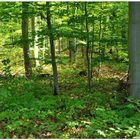 Bosque de hayas (Buchenwald)