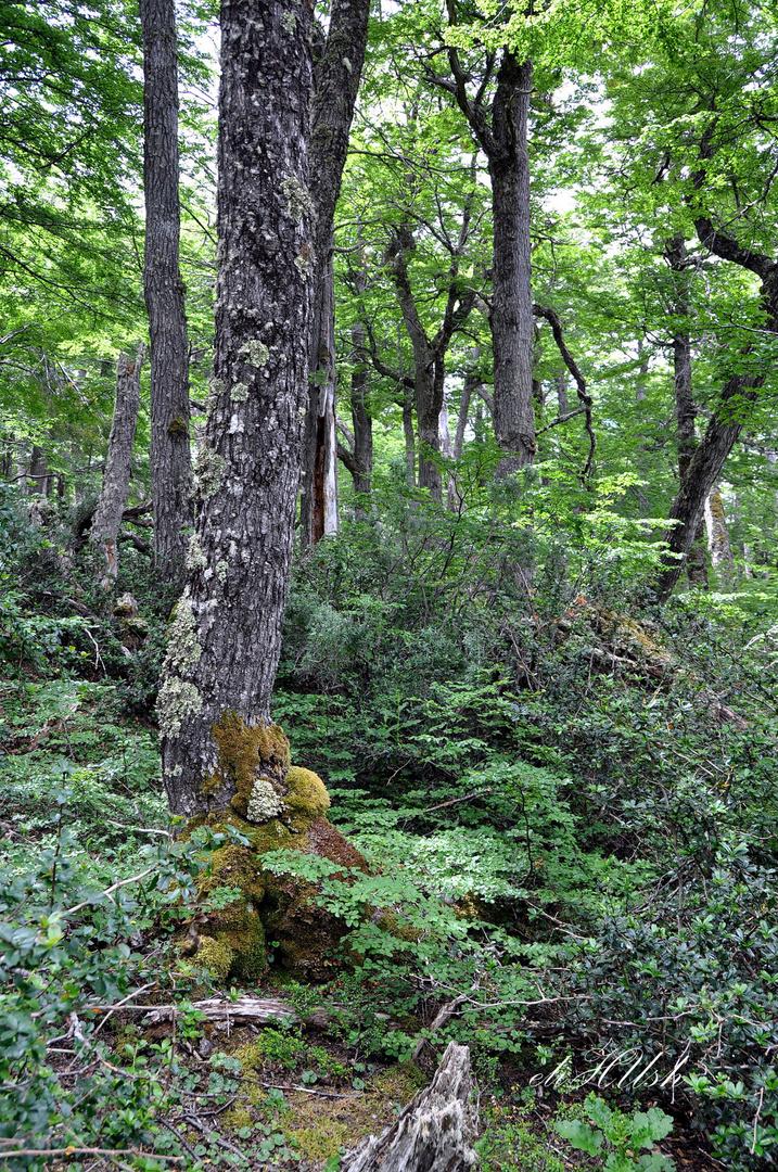 Bosque de la Laguna Parrillar