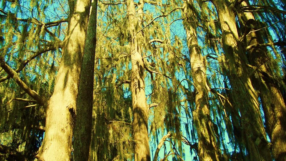 Bosque Encantado-9