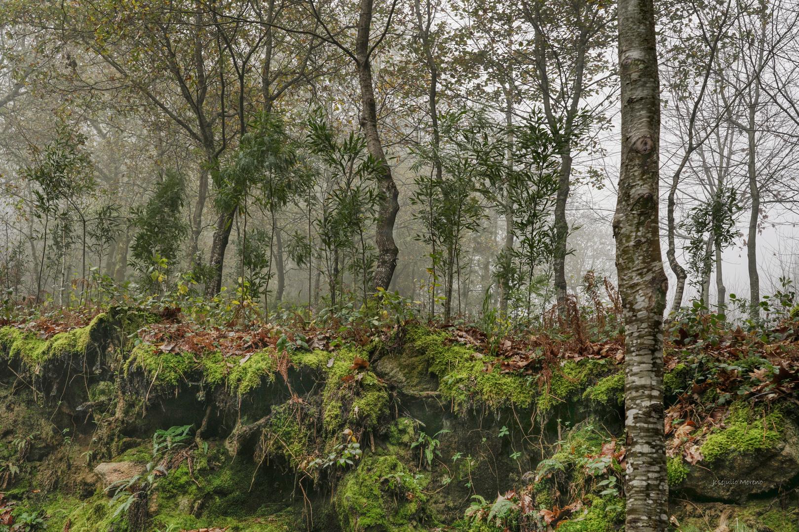 bosque gallego