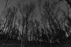 Bosque in-animado