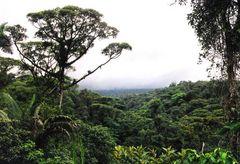 Bosque lluvioso (Regenwald)