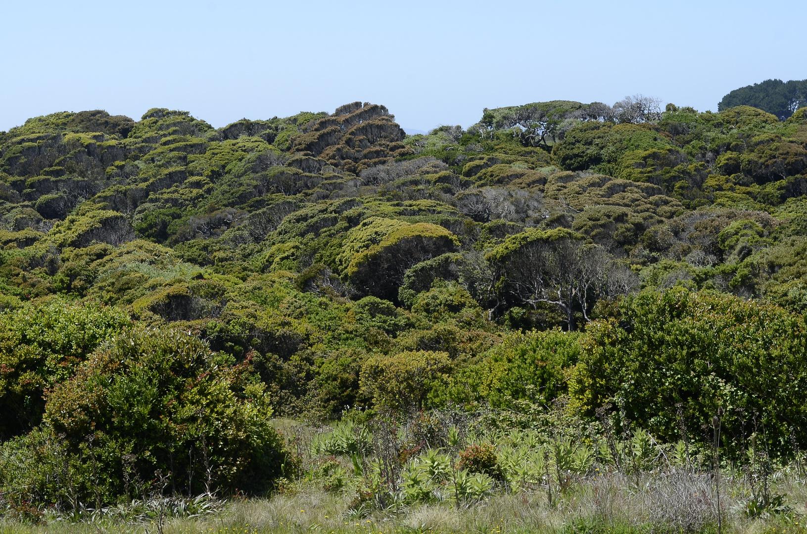 Bosque nativo chileno de costa (Queules, Pitaos, Peumos, Boldos, Olivillos, etc)