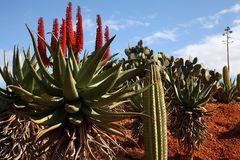 Botanicactus3