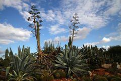 Botanicactus4