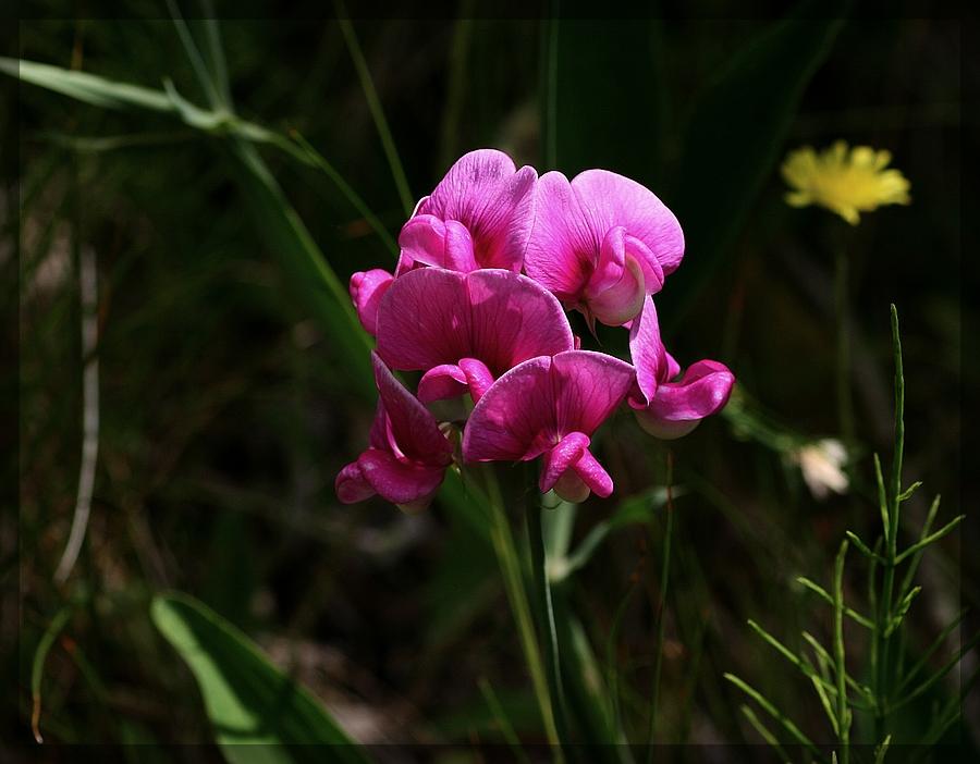 Botanische Schönheit...