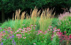 Botanischer-Garten