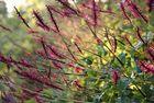 Botanischer Garten Berlin, 19.09.09 – 16