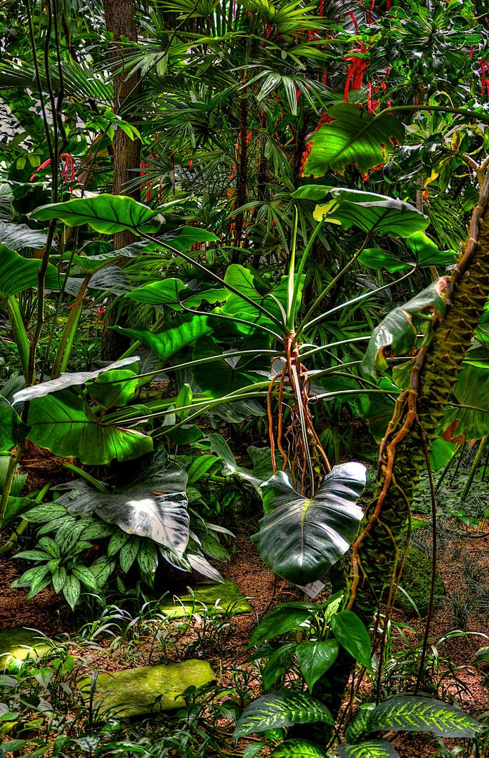 Botanischer Garten.