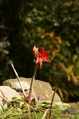 * Botanischer Garten *