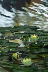 Botanischer Garten der Uni Basel 05