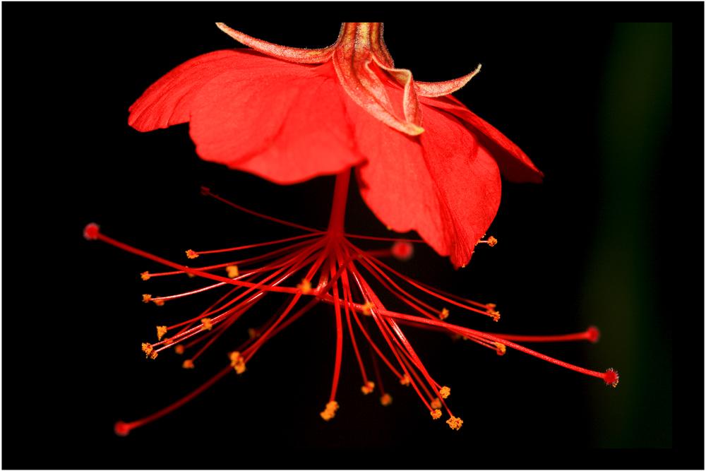 botanischer garten dresden foto bild pflanzen pilze flechten bl ten kleinpflanzen. Black Bedroom Furniture Sets. Home Design Ideas