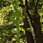 """Botanischer Garten in Graz mit Skulptur """"Früchtchen"""" von Veronika Smejkal"""