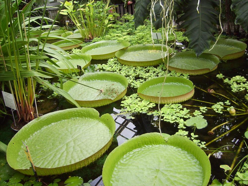 Botanischer garten jena foto bild natur kreativ natur bilder auf fotocommunity - Kreativ im garten ...