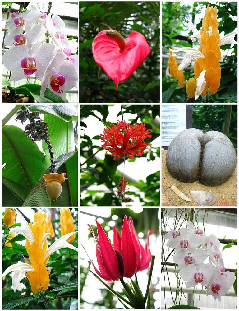 Botanischer Garten Jena Zusammenstellung Foto Bild Natur