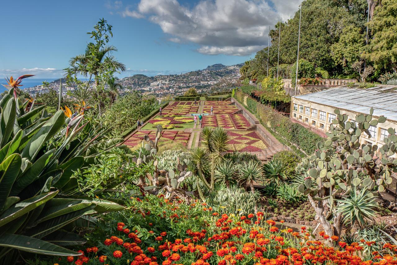 Botanischer Garten Madeira Foto Bild Landschaft Natur Blüten