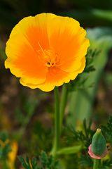 Botanischer Garten Mai 2011___