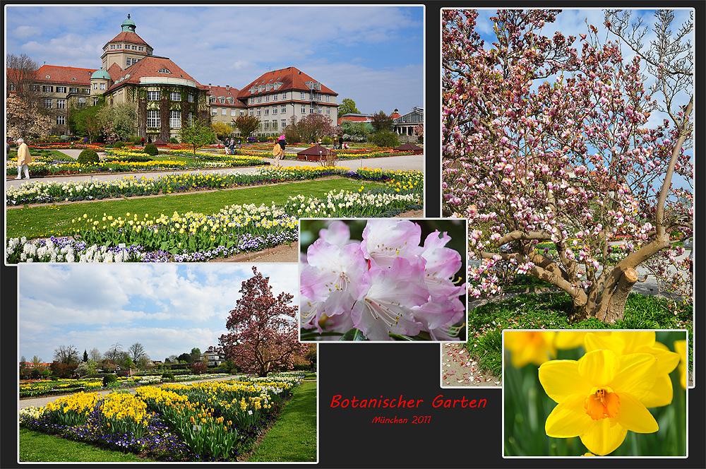Botanischer Garten München Nymphenburg Foto Bild Natur Bilder