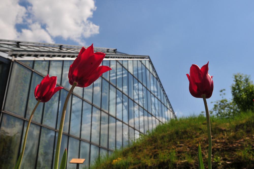 Botanischer Garten Osnabrück vor dem Tropenhaus