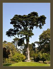 Botanischer Garten SF