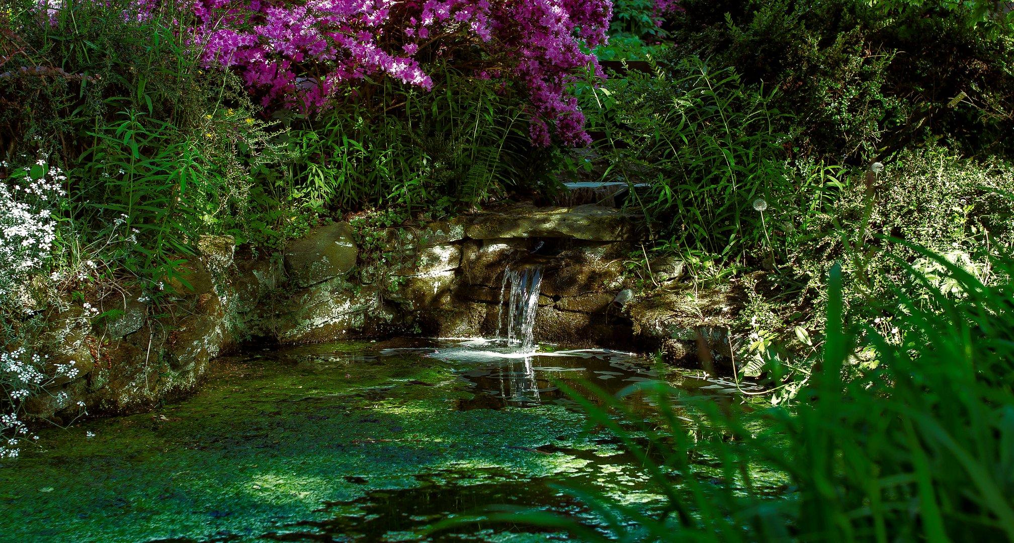 Botanischer Garten SG  #