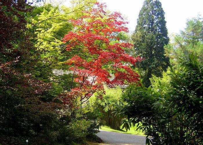 Botanischer Garten Sommer 2006