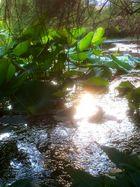 Botanischer Garten Wuppertal 2